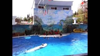 Финал шоу дельфинов в Сочинском дельфинарии. 05.05.2015