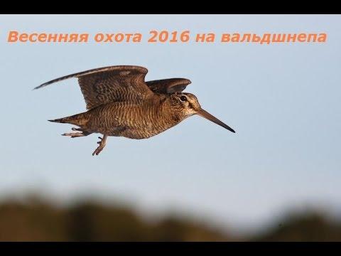 Весенняя охота 2016