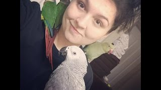 Bird Room Update! - African grey, Indian Ringnecks, and Conures.