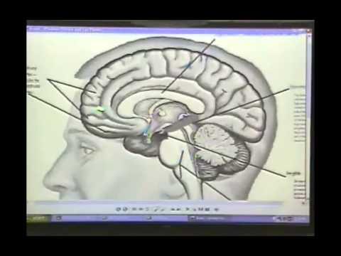 Toward an Interpersonal Neurobiology of the Developing Mind