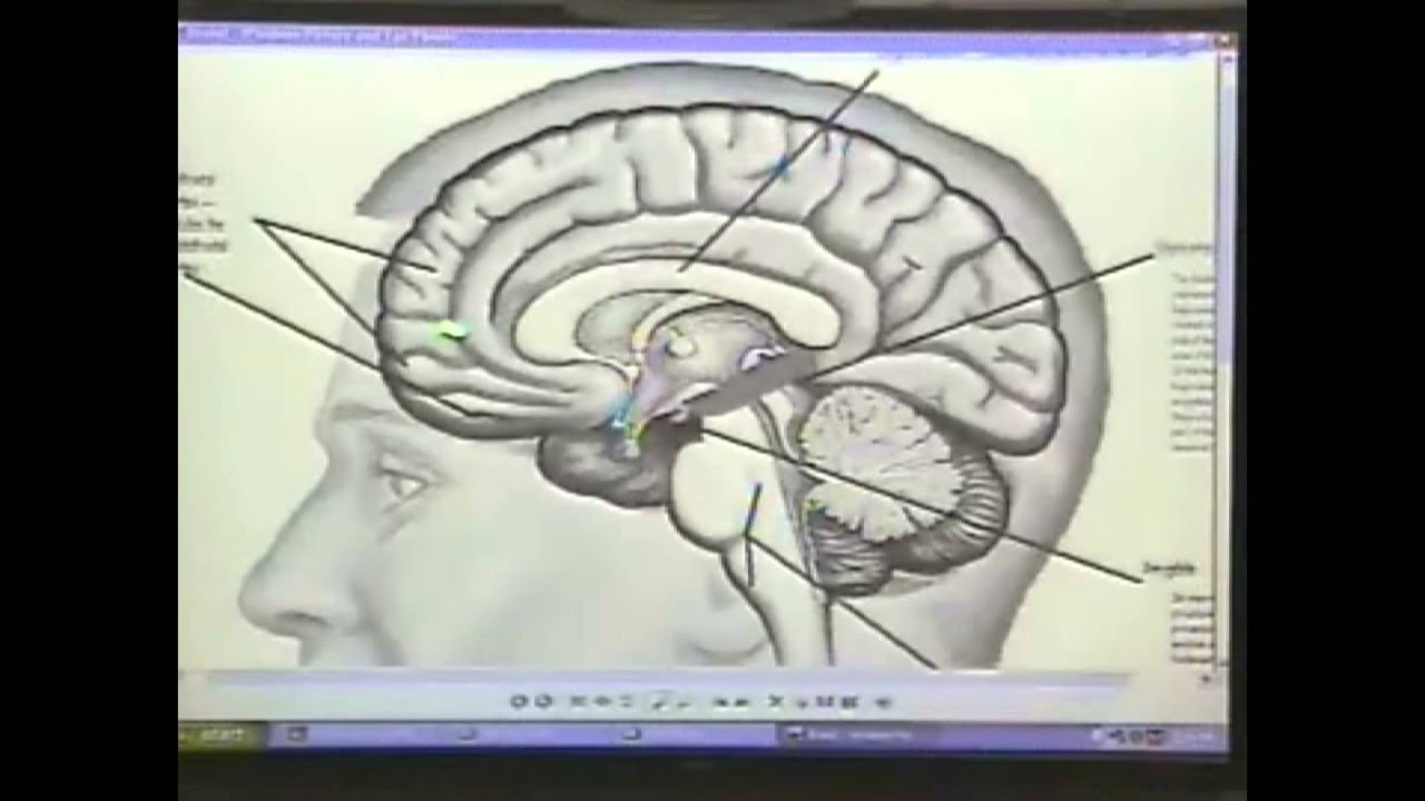 Toward an Interpersonal Neurobiology of the Developing Mind - YouTube