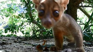 fossa babies run off with camera