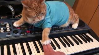Keyboard Cat Teaches Keyboard!