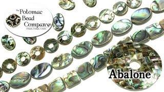 About Abalone