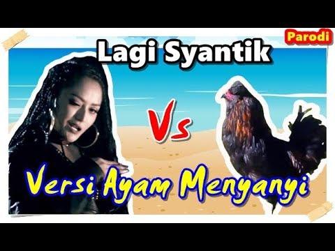 Lagi Syantik - Siti Badriah #Parodi versi Ayam