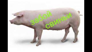 Забой свиньи