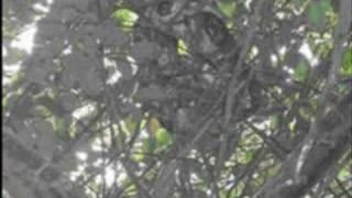 peligrosa anaconda en parque de la llovizna de venezuela