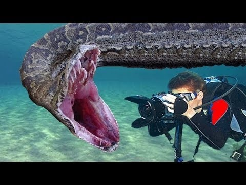 Top 5 most dangerous amazon rainforest animals youtube for Dangerous fish in the amazon