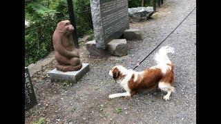 コイケルホンディエ犬、レックス(REX)の苦手な相手は・・・。 投稿ブロ...