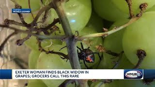 Exeter woman finds black widow spider in grapes