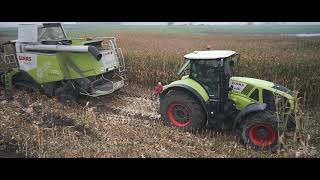 Wtopy przy kukurydzy na ziarno. Claas Lexion 750 Axion 920
