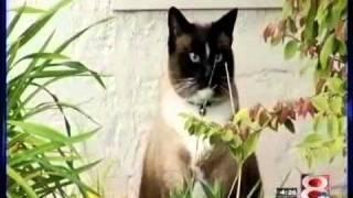 Cat Burglar Video