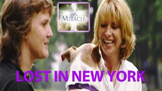 Boris' Adventure in New York - It's a Miracle - 6033