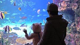 В океанариуме дают потрогать глубоководных обитателей