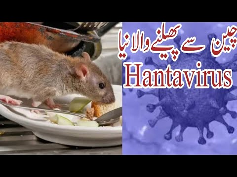 HANTAVIRUS OUTBREAK FROM CHINA | NEW HANTAVIRUS IN CHINA |Basic ...