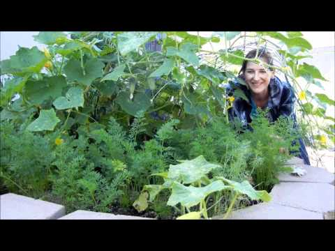 Grow Cucumbers Over Other Plants In A Small Space Youtube