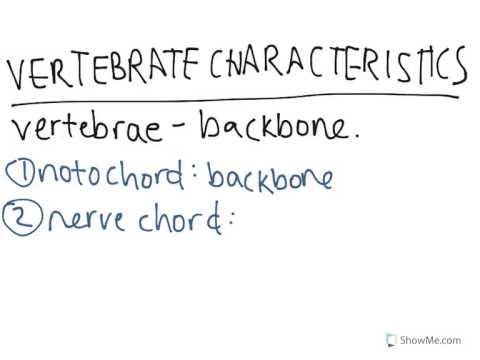 Vertebrate Characteristics