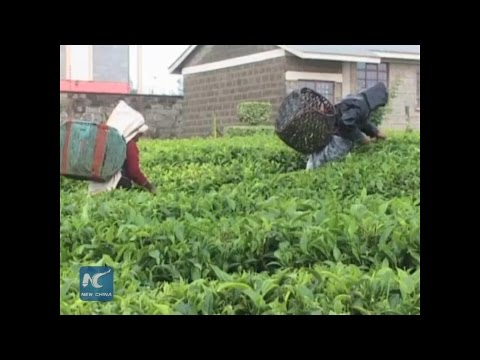 Kenya to learn from Chinese agriculture technology