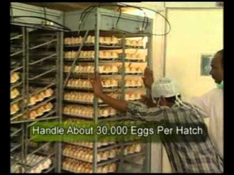 Project Directorate on poultry