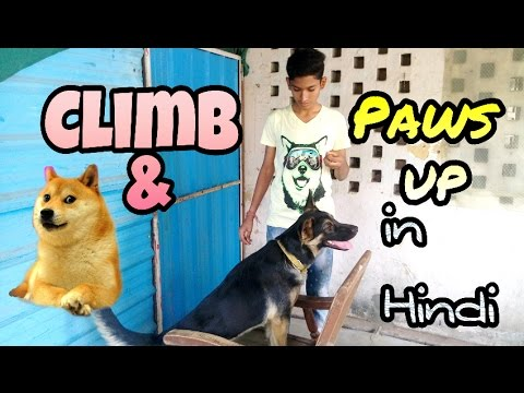 Climb and paws up- Dog training in hindi | Doggies squad |