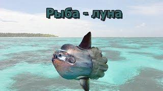 Русская Рыбалка 3.99 Рыба-луна на Сейшелах.
