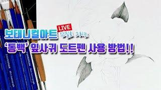 보태니컬아트 연필 그림 강좌 | 동백꽃 필 무렵에 '동백' 잎사귀 도트펜으로 그려보기LIVE(…