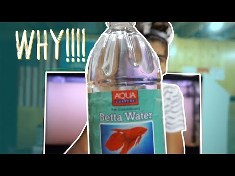 BETTA WATER?!?