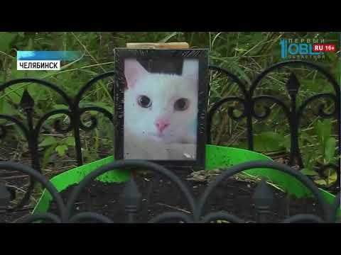 Жителей Челябинска напугала могила кота водворе