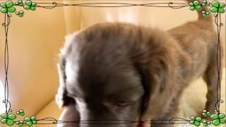 """""""性別 男の子 カラー グレー 誕生日 2017年2月18日"""" この子のページ(こ..."""