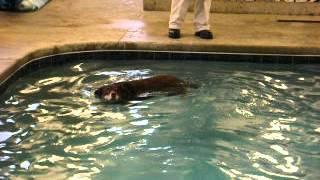 Indoor Swimming Pool For Dogs - Paws To Swim - Keep Your Dog Healthy All Winter