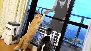 猫だいずがルンバに乗った?と言えるかどうか微妙ですが、動くルンバに...