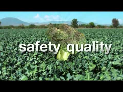 Food Chain Partnership: Sustainable broccoli production in Mexico