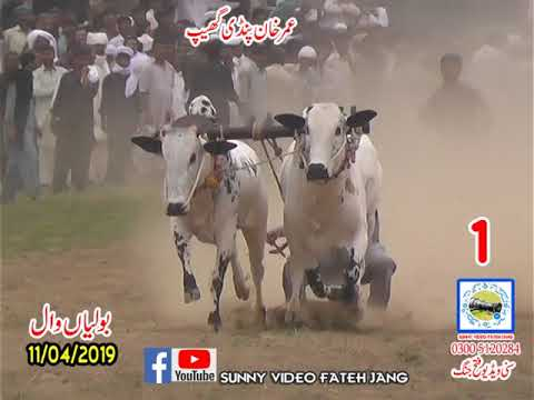 Bul Race In Pakistan Sunny Video Fateh Jang 11 04 2019. NO1