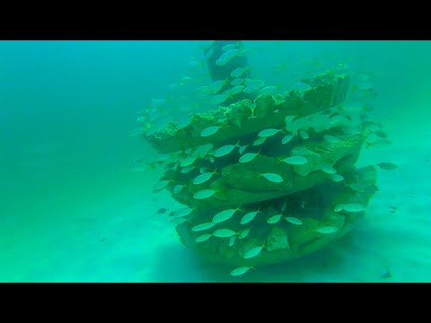 Snorkeling and Fishing Reefs in South Walton, Florida