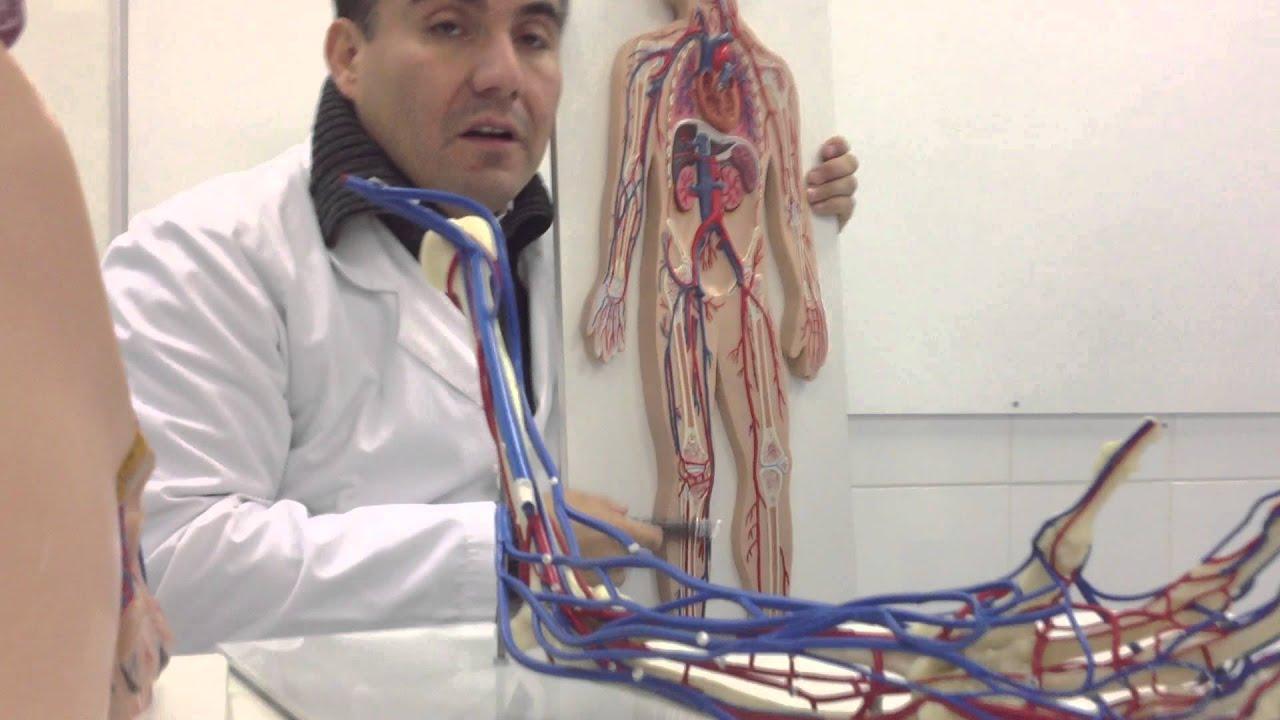 Clase Anatomia Venas - YouTube