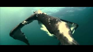 Oceans (2009) - Fishing and Hunting Segment