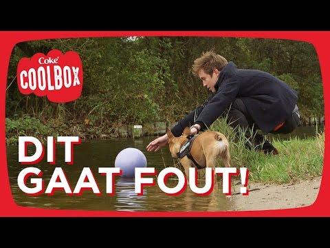 #10 Hond uitlaten met een missie - Coolbox