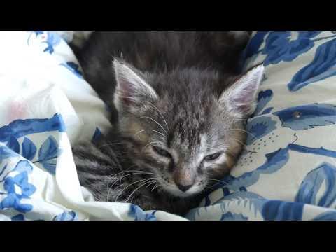 Kitten on the edge of a dream 4k UHD