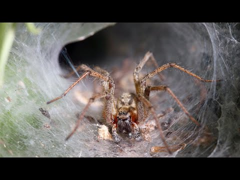 Вопрос: Сколько и какие виды пауков обитают в Австралии?
