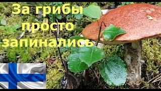 Татьяна. За грибы просто запинались. Грибной сезон в Финляндии 2020 ч.1