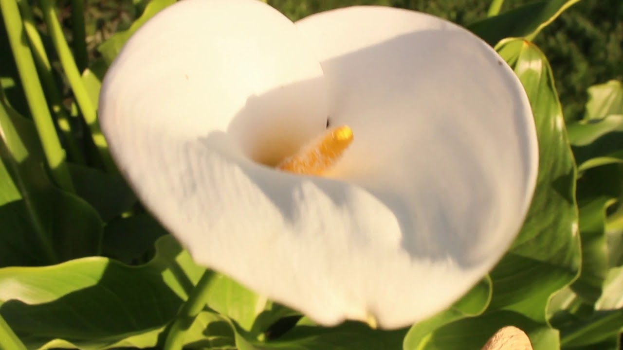 Pretty White Flower With A Yellow Center Youtube
