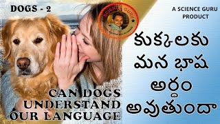 how to understand the language of dogs