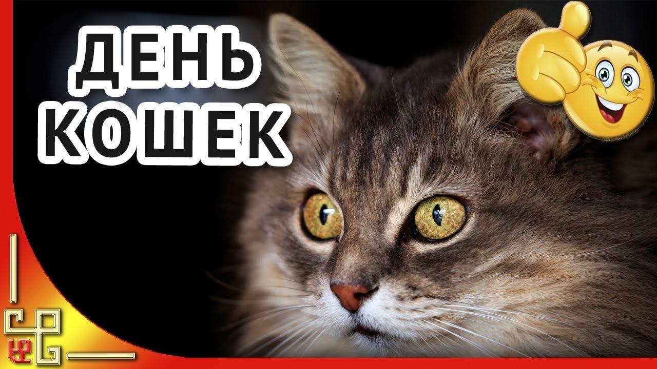 Прикольные поздравления день кошек фото 411