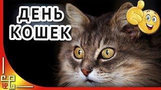 Кошки 🐱1 марта Международный день кошки 🐱Видео открытка на день кота