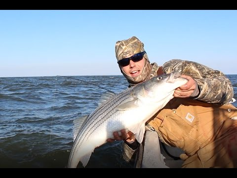 Red hot light tackle striped bass fishing on chesapeake for Chesapeake bay striper fishing