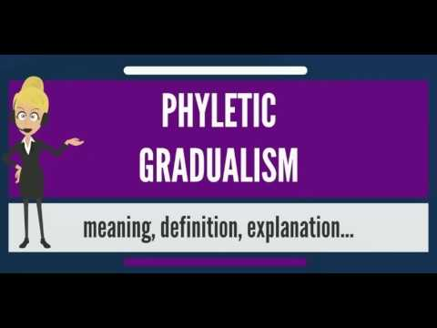 What is PHYLETIC GRADUALISM? What does PHYLETIC GRADUALISM mean? PHYLETIC GRADUALISM meaning