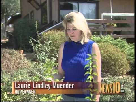 laurie-muender---asbestos
