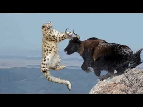 Вот Как Травоядные Защищаются от Хищников