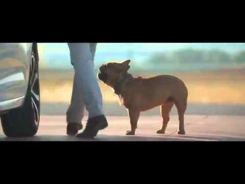 Dog Stretching Citroën Commercial