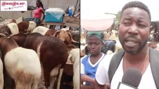 Tabaski  : Coût élevé du mouton, les vendeurs et clients se prononcent